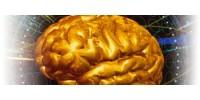 Тест - Работа головного мозга