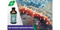 Чем полезен морской огурец